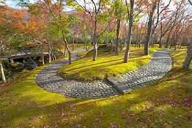 箱根(神仙郷)写真