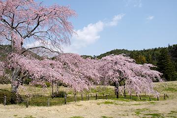 京都 平安郷